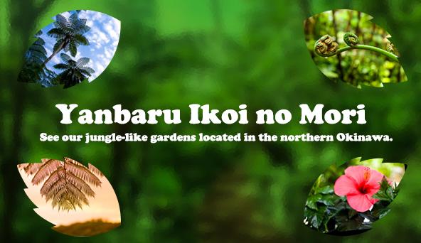 Yanbaru Ikoi no Mori
