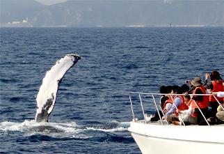 赏鲸(1月~4月上旬限定)03