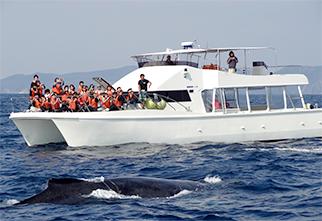 赏鲸(1月~4月上旬限定)04