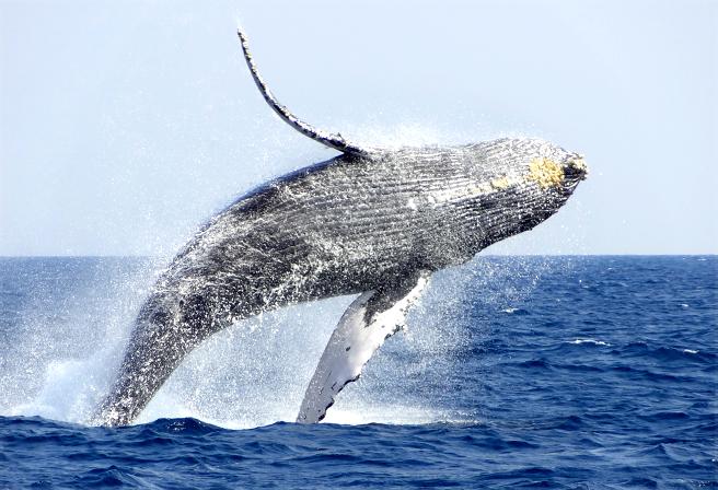 赏鲸(1月~4月上旬限定)01