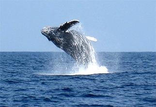 赏鲸(1月~4月上旬限定)02