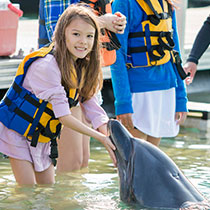 dolphinschool