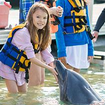 dolphinschool_sub