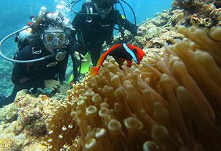 サンゴの楽園+クマノミ& 熱帯魚体験ダイビング