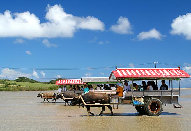 水牛で回るおすすめの離島観光コース5選