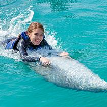 dolphinpremiumswim_sub