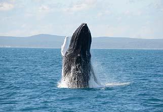 summer-whale02