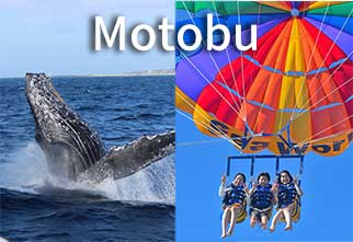 seaworld_motobu_para_whale_main