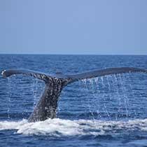 seaworld_para_whale_sub2