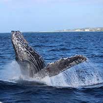 seaworld_whale_sub5