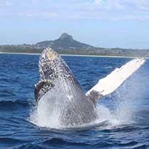 seaworld_whale_sub6