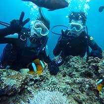 熱帯魚ダイビング