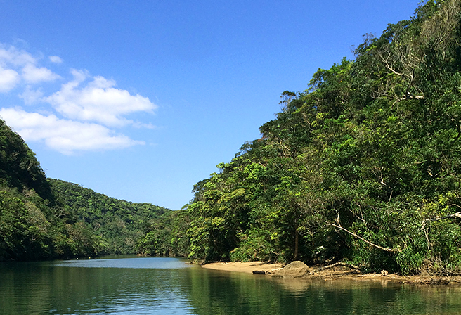 "〝""The Galapagos of the East"" and ""Japan's Last Land of Mystery,"" Take a Trip to Iriomote Island"
