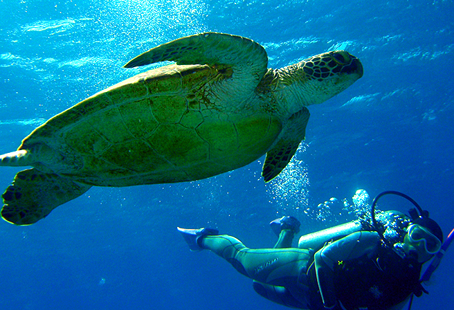 Spawning Time Between May and August - A High Season To See Sea Turtles