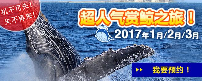 bn_whalewatching_kantai