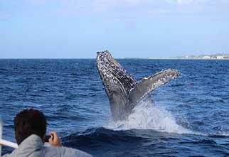 seaworld_motobu_whale_main