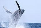 mermaid-whale-watching-sum