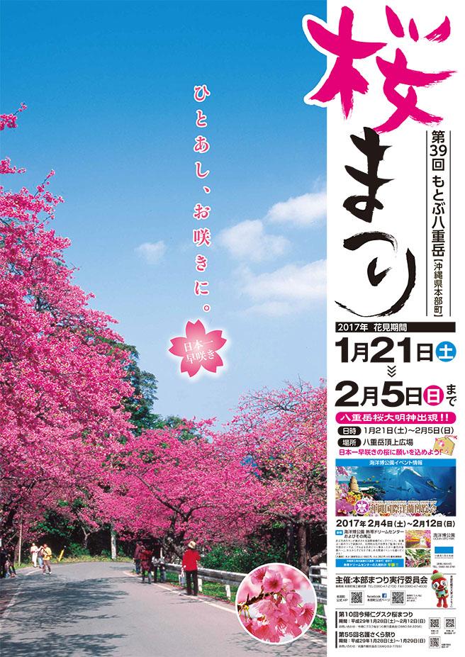 39th Motobu Yaedake Sakura Festival