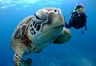 Reeffers_thumbnail
