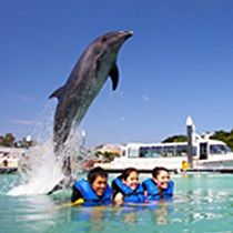 dolphin_fun_swim