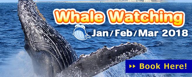 bn_whalewatching_2018_en