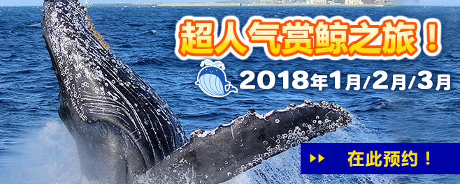 bn_whalewatching_2018_kantai