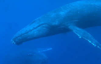 whale-new-332