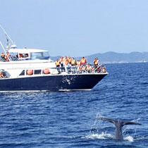 whale-sub2