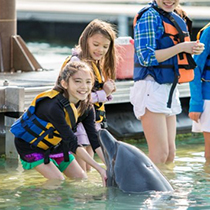 4-motobu_dolphin_en