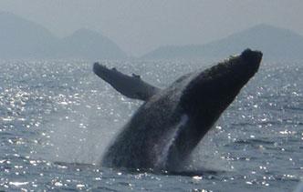 whale-watching_main