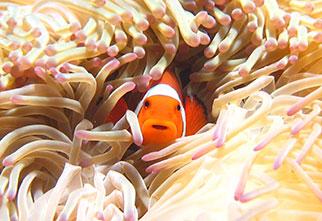 サンゴの楽園+クマノミ& 熱帯魚シュノーケル