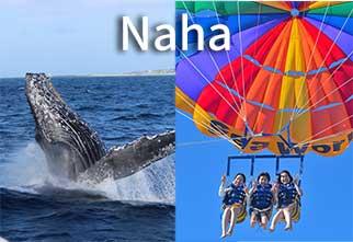 naha_para_whale_main