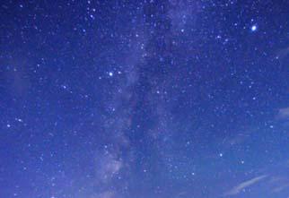 starry-top