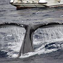 whale-sub3