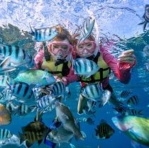 Summer Snorkel1-210