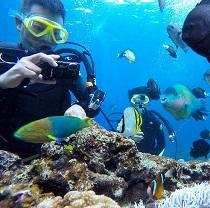 Summer diving2-210